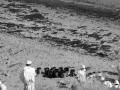 加州海域发生石油泄漏事故